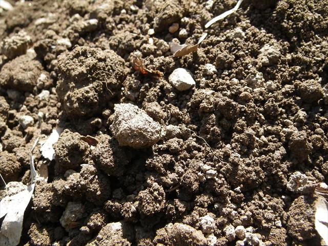 天然の腐葉土のみを使用