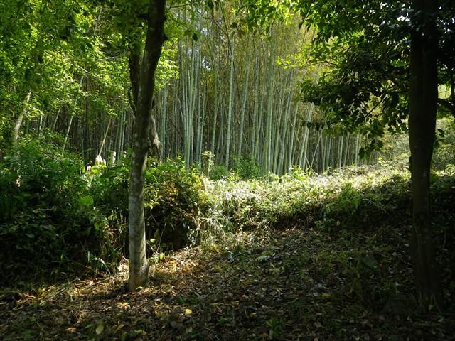 花壇から眺める第二農園の傍の竹林