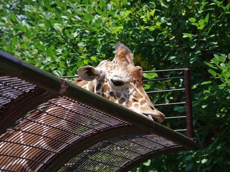 野毛山動物園その2