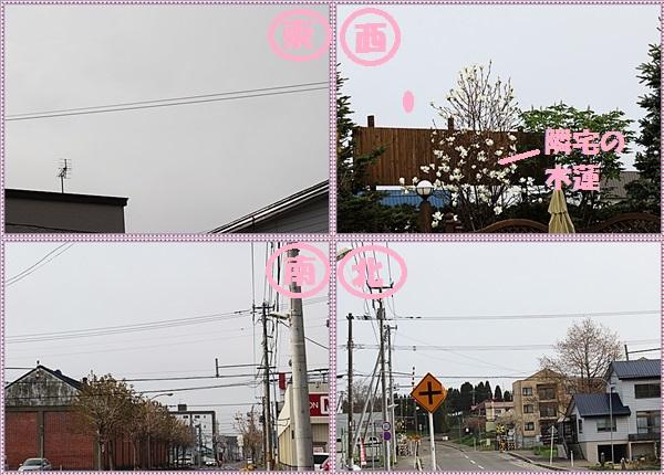 IMG_5020-tile.jpg