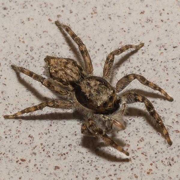 AZOTEYの蜘蛛