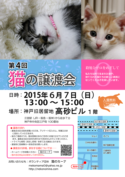 猫の譲渡会_6月7日