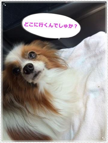 IMG_0305.jpg