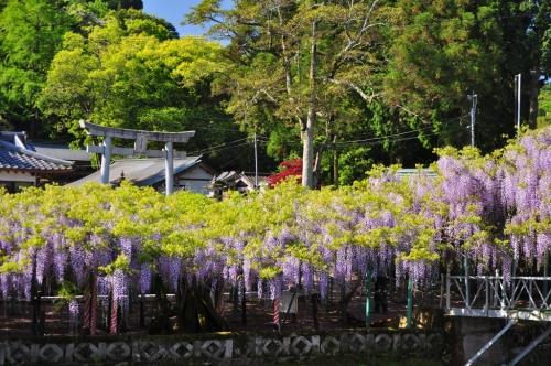 西寒田神社 (3)