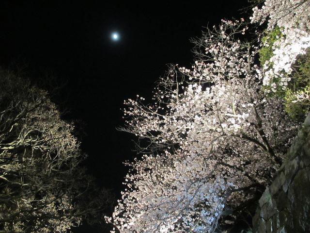 2015夜桜2