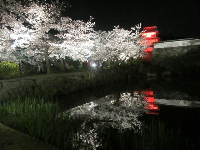 2015夜桜7