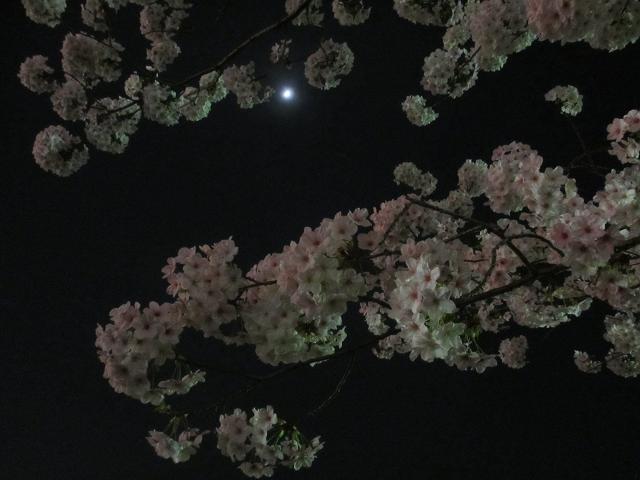 2015夜桜8