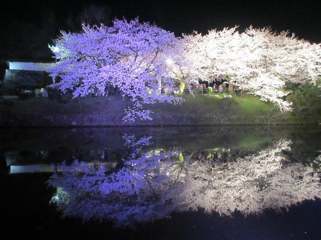 2015夜桜6