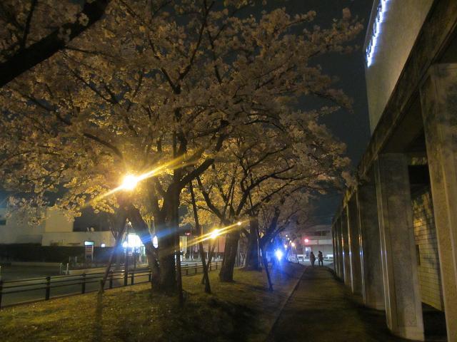夜桜パート2