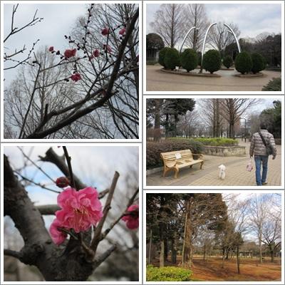 横山公園(2015_01)