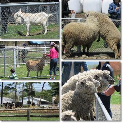 八ヶ岳農場の動物(2015_5)