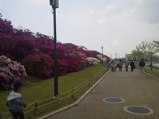 浅香山つつじまつり (2)