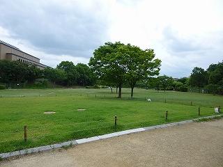 霞ヶ丘公園 (2)