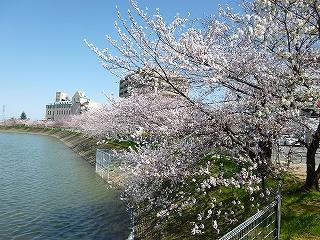 水賀池公園(桜)