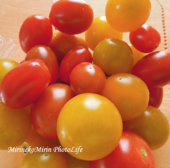 20150712トマト
