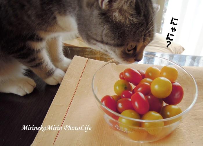 20150712まりとトマト