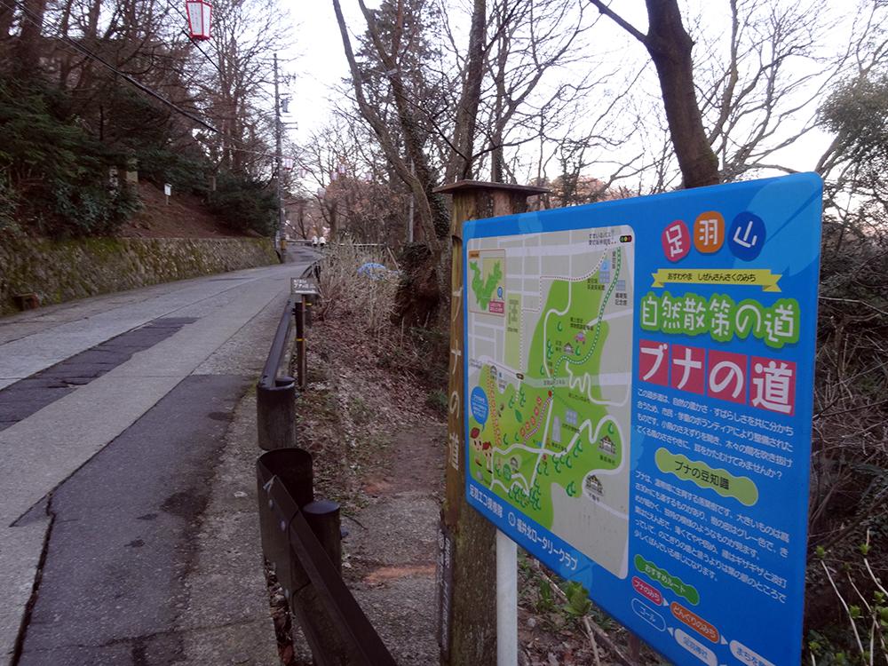 ブナの道1