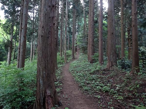 吉野ヶ岳02