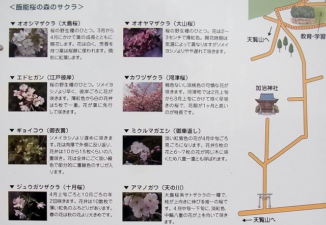20131118005113c1a桜の森