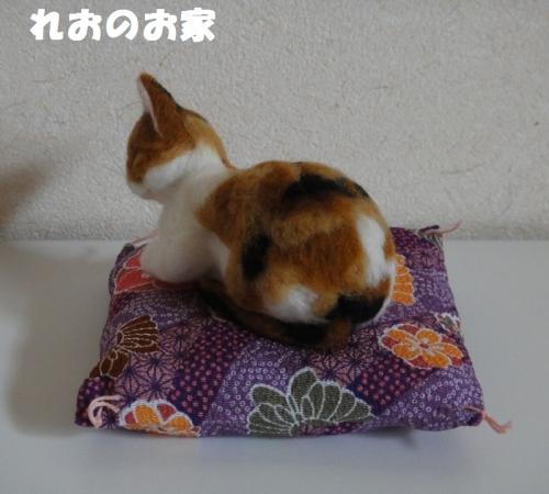 香箱三毛猫2