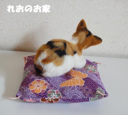 香箱三毛猫3