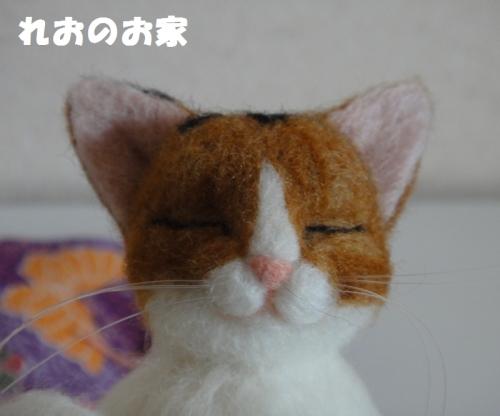 香箱三毛猫4