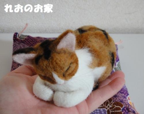 香箱三毛猫5