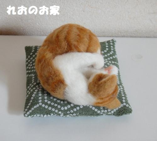 ねんね茶白3