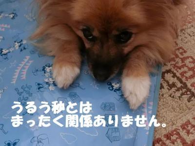 002繝シ菫ョ豁」_convert_20150705212846