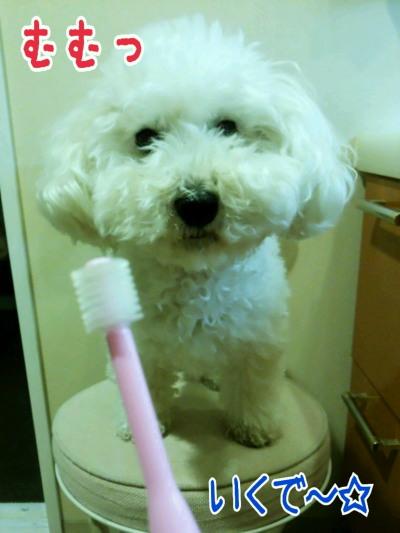 歯磨きみゆ