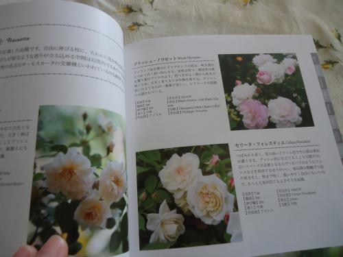 old-rose-ippai2.jpg