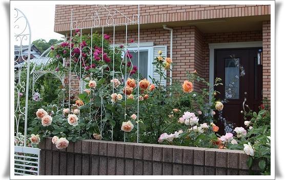 s-150513南の庭IMG_2338