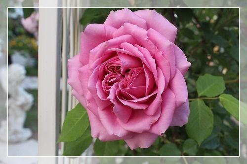 s-150708ローブ・ア・ラ・フランセーズIMG_4393