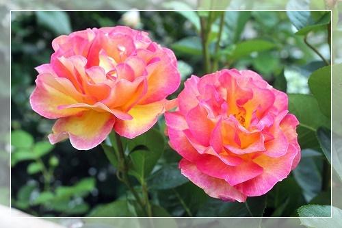 s-150726ラパリジェンヌIMG_4675