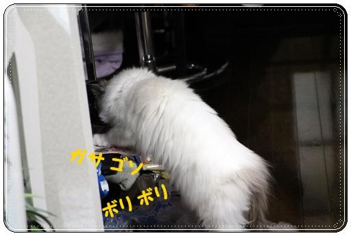 s-150704IMG_0789-1.jpg
