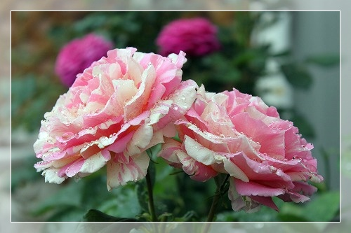 s-15072120110607IMG_8902.jpg