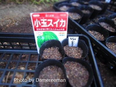 2015.3.26菜園3