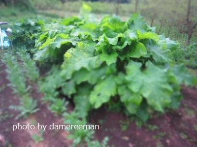 2015.4.22菜園4