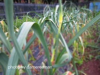 2015.4.22菜園5