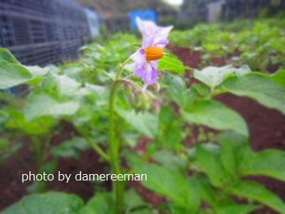 2015.4.22菜園6