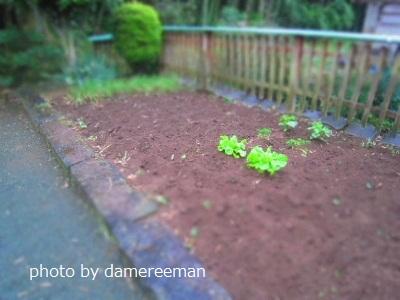 2015.5.7菜園3