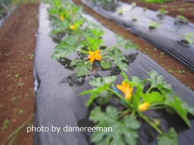 2015.5.7菜園5