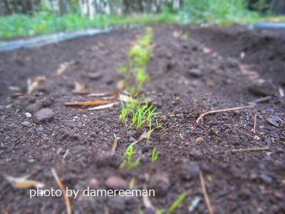 2015.5.5菜園11