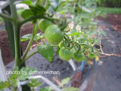 2015.5.9菜園3