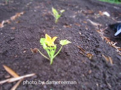 2015.5.9菜園6