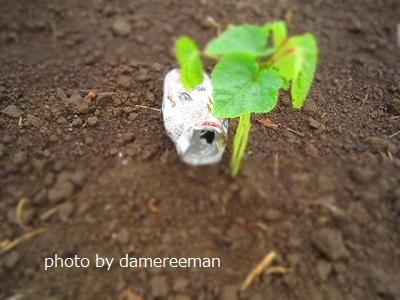 2015.5.9菜園14