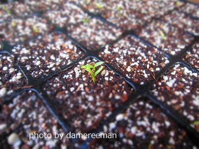 2015.5.10菜園
