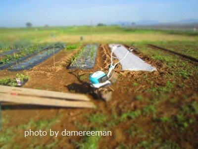 2015.5.10菜園2
