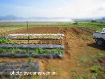 2015.5.10菜園8