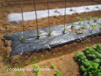 2015.5.10菜園11